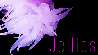 Jellies (2013)